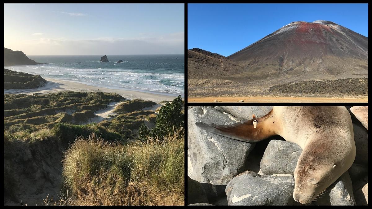 Was kosten 4 Wochen Neuseeland? Frugal reisen von Christchurch bis Auckland + Spartipps